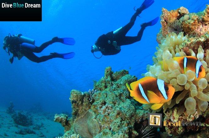 35€ από 70€ για μία (1) κατάδυση γνωριμίας Scuba Diving με αυτόνομη συσκευή κατάδυσης σε ολιγομελή τμήματα & υπέροχη υποβρύχια φωτογράφηση με την Σχολή Κατάδυσης «Dive Blue Dream» στους Αγίους Αναργύρους! Έκπτωση 50%!!