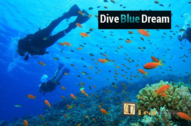 190€ από 300€ για μία εκμάθηση αυτόνομης κατάδυσης με την Σχολή Κατάδυσης «Dive Blue Dream» στους Αγίους Αναργύρους! Έκπτωση 37%!! εικόνα
