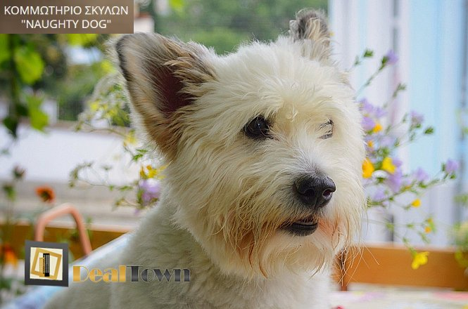 Από 18€ για πακέτο περιποίησης σκύλου που περιλαμβάνει ένα (1) μπάνιο με ειδικό σαμπουάν για αφαίρεση παρασίτων, ένα (1) κούρεμα, ένα (1) στέγνωμα & χτένισμα, ένα (1) ξεκόμπιασμα, ένα (1) καθαρισμό αυτιών/αδένων, ένα (1) κόψιμο & τρόχισμα νυχιών, βούρτσισμα δοντιών, έλεγχος του δέρματος και του τριχώματος και αφαίρεση νεκρής τρίχας, χωρίς καμία νάρκωση, στο Naughty Dog στον Κολωνό. εικόνα