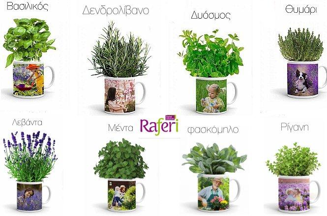 9.90€ πρωτότυπη Κούπα με Αρωματικό Φυτό (επιλογή από 8 διαφορερικά είδη) & την αγαπημένη σας φωτογράφια από την Raferi Digital με δυνατότητα πανελλαδικής αποστολής στον χώρο σας. Μπορείτε να διαλέξετε κάποια από τις φωτογραφίες μας ή να μας στείλετε τη δική σας.